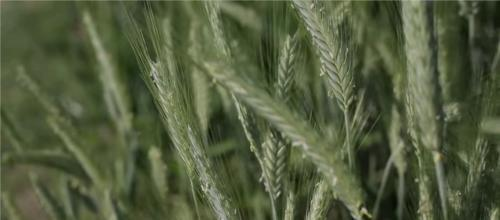 L'agroalimentare dell'Emilia-Romagna tra barriere commerciali, Brexit e accordi internazionali