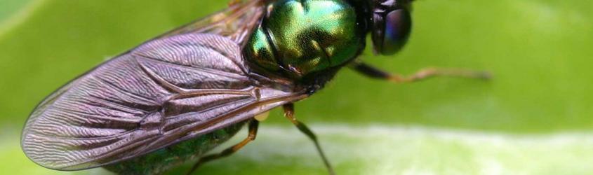 Biogest-Siteia: grazie alle mosche soldato, un metodo rivoluzionario per valorizzazione di rifiuti organici