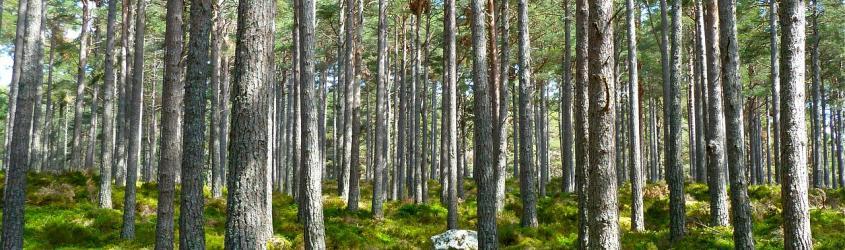 Bilancio dell'UE: la Commissione propone di aumentare i finanziamenti a sostegno dell'ambiente e dell'azione per il clima