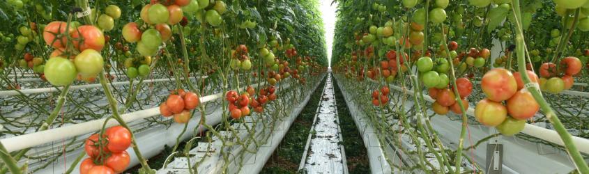 SmartAgriHubs lancia l'Innovation Portal: un punto di incontro per la digitalizzazione del settore Agrifood